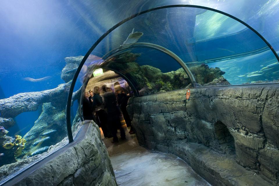 Aquário Sea Life em Londres